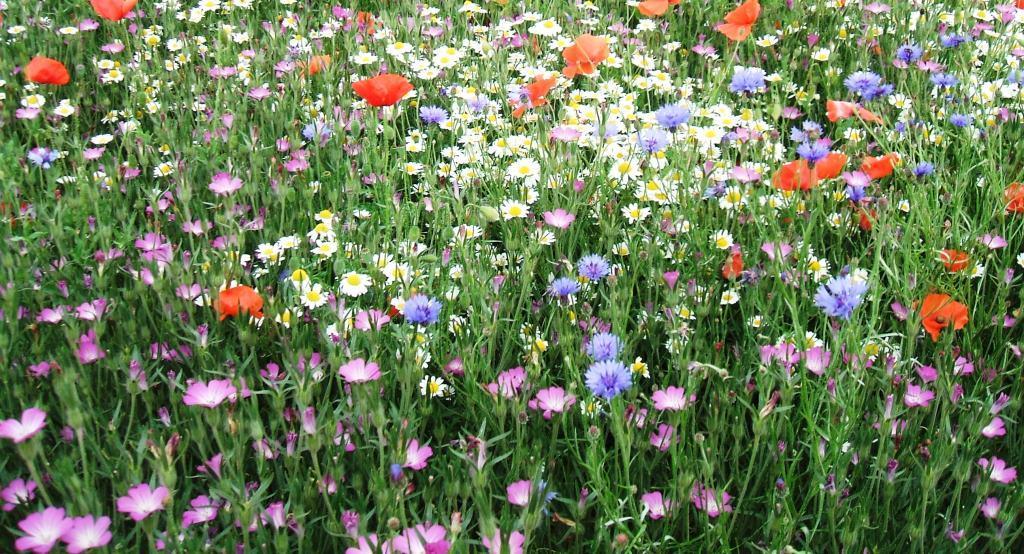 Gardeners Cambridge Area Garden Ftempo